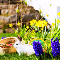 Easter Bunny On Meadow With Basket And Eggs Stock Photography - 29524722