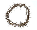 Crown Of Thorns Stock Photos - 29531923