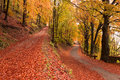 Autumn Colors Royalty Free Stock Images - 29539409