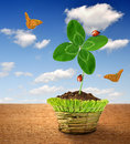 Clover In Decorative Pot Royalty Free Stock Image - 29557706