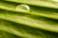 Water Drop On Fresh Leaf Royalty Free Stock Photos - 29563528