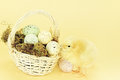 Easter Chick And Eggs Royalty Free Stock Photos - 29577488