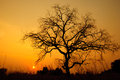 Sunset With Dead Tree Stock Photos - 29591043