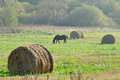 Straw Bales And Grazing Horse In The Field Royalty Free Stock Photography - 29603987