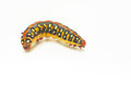 Yellow Caterpillar  On White Royalty Free Stock Images - 29604029