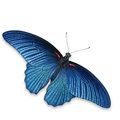 Black Butterfly Royalty Free Stock Images - 29611479