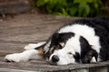 Lazy Dog Days Of Summer Stock Image - 29627871