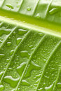 Green Water Drops Leaf Background Stock Images - 29633864