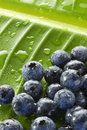 Blueberries Water Drops Leaf Background Stock Photography - 29634012