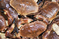 Fresh Dungeness Crabs Royalty Free Stock Image - 29665826