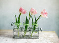 Pink Tulips Royalty Free Stock Image - 29688876