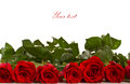 Red Rose Royalty Free Stock Images - 29689269