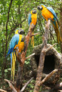 Parrots In The Forest Royalty Free Stock Photo - 29726615