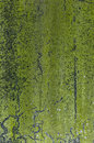Green Moss Texture Royalty Free Stock Image - 29734746