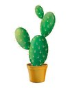 Green Opuntia Cactus In Yellow Pot. Royalty Free Stock Images - 29762579