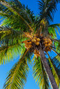 Palm Tree Royalty Free Stock Image - 29772046