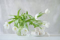Still Life With White Tulips Stock Image - 29776311