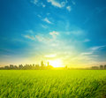 Rice Field Plantation And City Royalty Free Stock Image - 29839616