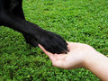 Paw In Hand (11) Royalty Free Stock Photo - 29849815