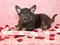 I Love You Puppy Stock Images - 29859524