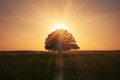 Sunrise Behind Tree Royalty Free Stock Photos - 29860608