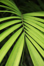 Coconut Leaf Background Stock Photos - 29861623