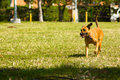 Dog Walk Royalty Free Stock Image - 2992086