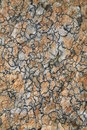 Abstract Pattern Of Lichen Stock Photo - 2995610