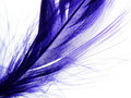 Feather Royalty Free Stock Images - 2996779