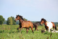 Two Horses Running At The Pasture With Dogs Stock Photo - 29929990