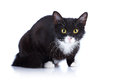 Black-and-white Cat With Yellow Eyes. Stock Image - 29960671