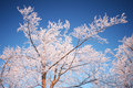 Tree Branches In Winter Royalty Free Stock Photos - 29968548