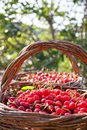 Cherries In The Basket Royalty Free Stock Photos - 30049198