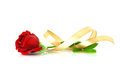 Red Rose With Gold Ribbon Over White Royalty Free Stock Photography - 30052317