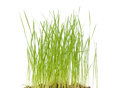 Fresh Grass Stock Images - 30072424