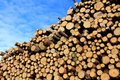Pulp Wood And Blue Sky Stock Images - 30077394