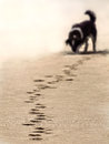 Dog  Footstep Royalty Free Stock Photography - 30085227