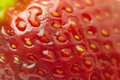 Macro Organic Strawberry Royalty Free Stock Photos - 30099008
