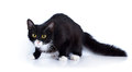 Black-and-white Scared Cat With Yellow Eyes. Royalty Free Stock Photos - 30107828