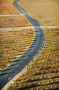 Road In Vineyard Royalty Free Stock Photo - 30122515