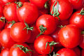 Fresh Tomatoes Royalty Free Stock Photography - 30126757