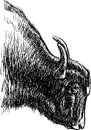 Head Of A Bull Royalty Free Stock Images - 30157699