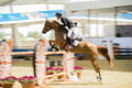 Action From The  CHI Al Shaqab 2013 Royalty Free Stock Photography - 30198337