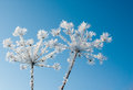 Frost Stock Images - 30202984