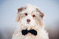 Elegant Cute Dog Wearing A Tie - Portrait Royalty Free Stock Images - 30205109