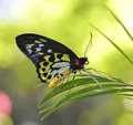 Tropical Butterfly Royalty Free Stock Image - 30219026