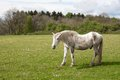 Old Horse In A Meadow With Dandelions Royalty Free Stock Photo - 30221805