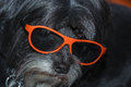 Dog With 3d Glasses Stock Images - 30223674