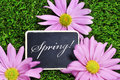 Spring Royalty Free Stock Photo - 30228415