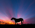 Horse Silhouette Sun Rays Royalty Free Stock Image - 30230236